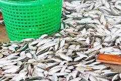 Fresh fish from sea market Royalty Free Stock Photo