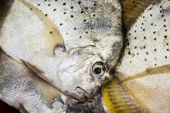 Fresh fish from the sea in the southern of Thailand. royalty free stock images