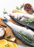 Fresh fish seabass on white. Fresh fish seabass. Raw fish seabass with spices and herbs ingredients for cooking on white background. Top view with copy space Royalty Free Stock Image
