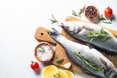 Fresh fish seabass on white. Fresh fish seabass. Raw fish seabass with spices and herbs ingredients for cooking on white background. Top view with copy space Stock Images
