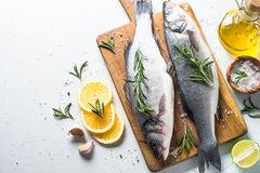 Fresh fish seabass on white. Fresh fish seabass. Raw fish seabass with spices and herbs ingredients for cooking on white background. Top view with copy space Royalty Free Stock Images
