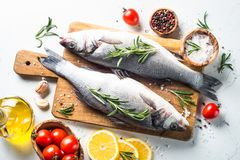Fresh fish seabass on white. Fresh fish seabass. Raw fish seabass with spices and herbs ingredients for cooking on white background. Top view Royalty Free Stock Photo