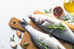 Fresh fish seabass on white. Fresh fish seabass. Raw fish seabass with spices and herbs ingredients for cooking on white background. Top view with copy space Royalty Free Stock Photography