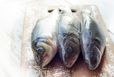 Fresh fish seabass. On a wooden board. Selective focus Royalty Free Stock Image
