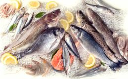 Fresh fish and seafood. On white wooden background. Healthy eating. Top view Royalty Free Stock Photography