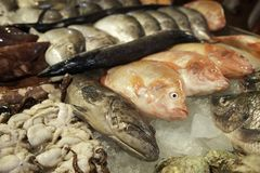 Fresh fish and seafood on ice. Different fish, squid, octopus and clams. Seafood market, seafood delicacies. stock image