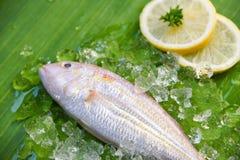 Fresh fish seafood on ice and lemon parsley banana leaf background. Fresh fish seafood on ice and lemon parsley on banana leaf background royalty free stock images