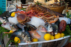 Fresh fish and seafood in ice Stock Photos