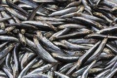 Fresh fish at the seafood market.  Stock Image