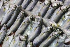 Fresh fish at the seafood market.  Stock Photos