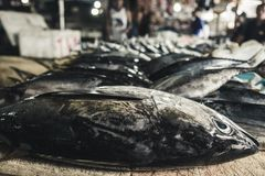 Fresh fish in seafood market on Bali island Royalty Free Stock Image