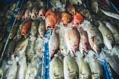 Fresh fish in seafood market in Bali island Royalty Free Stock Image