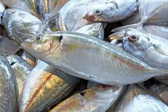 Fresh fish seafood in market closeup background Royalty Free Stock Images