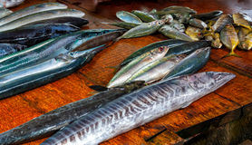 Fresh fish at the seafood market. Stock Image
