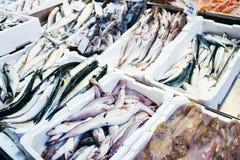 Fresh fish in seafood market. Fresh fish in basket in seafood market. Many kinds of fish Stock Photos