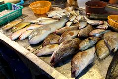 Fresh fish on seafood market stock photo