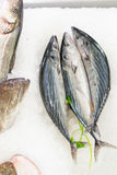 Fresh fish. In the seafood market sale Stock Photography