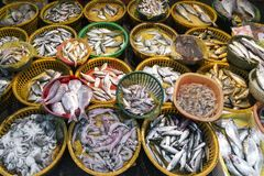 Fresh fish and seafood market stall display in xiamen china. Fresh fish and seafood market stall display in xiamen city china Royalty Free Stock Photos