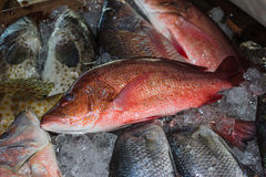 Fresh fish at the seafood market Royalty Free Stock Photos