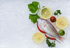 Fresh fish seafood plate with lemon parsley on ice background stock photos
