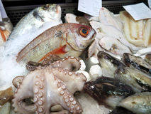 Fresh fish and seafood Stock Photos