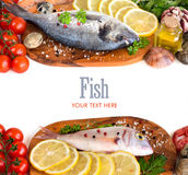 Fresh fish, seafood and vegetables. Isolated on white Royalty Free Stock Images