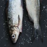Fresh Fish. Selective Focus. Shallow Depth of Field Royalty Free Stock Images
