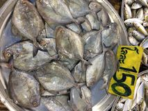 Fresh fish sell in the market Royalty Free Stock Photo