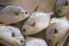 Fresh fish for selling Stock Photo