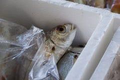 Fresh fish and shellfish in Cambrils Harbor, Tarragona, Spain. Royalty Free Stock Image