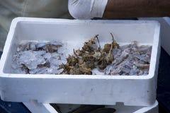 Fresh fish and shellfish in Cambrils Harbor, Tarragona, Spain. Royalty Free Stock Photo