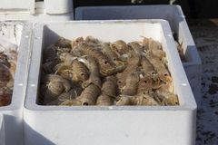 Fresh fish and shellfish in Cambrils Harbor, Tarragona, Spain. Royalty Free Stock Photos
