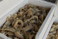 Fresh fish and shellfish in Cambrils Harbor, Tarragona, Spain. Stock Images