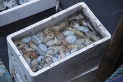 Fresh fish and shellfish in Cambrils Harbor, Tarragona, Spain. Stock Photo