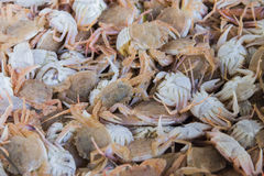 Fresh fish and shellfish in Cambrils Harbor, Tarragona, Spain. Stock Photography