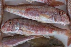 Fresh fish, shellfish, seafood in Cambrils Harbor Market, Catalo. Nia, Spain Royalty Free Stock Photography