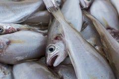 Fresh fish, shellfish, seafood in Cambrils Harbor Market, Catalo. Nia, Spain Stock Photo