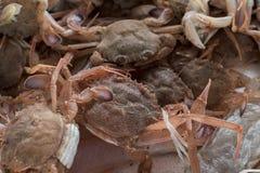 Fresh fish, shellfish, seafood in Cambrils Harbor Market, Catalo. Nia, Spain Stock Photos
