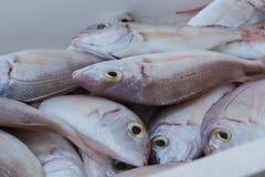 Fresh fish, shellfish, seafood in Cambrils Harbor Market, Catalo. Nia, Spain Royalty Free Stock Image