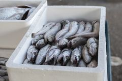 Fresh fish, shellfish, seafood in Cambrils Harbor Market, Catalo. Nia, Spain Royalty Free Stock Images