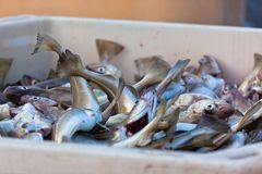 Fresh Fish in Shipping Container Stock Photography