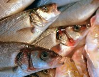 fresh fish in a shop Royalty Free Stock Images