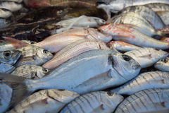 Fresh fish. On a shop counter Royalty Free Stock Photos