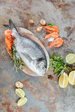 Fresh fish and shrimps Royalty Free Stock Photography