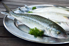 Fresh Fish on silver platter Stock Photography