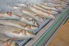 Fresh fish with silver scales, flippers under ice, Royalty Free Stock Images