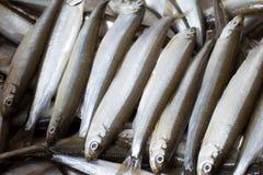 Fresh fish smelt Royalty Free Stock Images