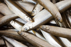 Fresh fish smelt Stock Photos