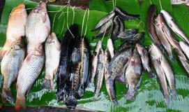 Fresh fish. Sold at a market near Inle Lake, Myanmar Stock Photography