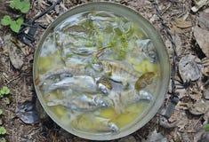 Fresh fish-soup 9 Stock Photography